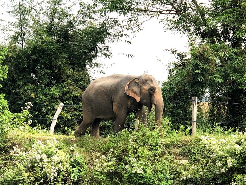 Is it just me… or is this elephant posing for the camera!?