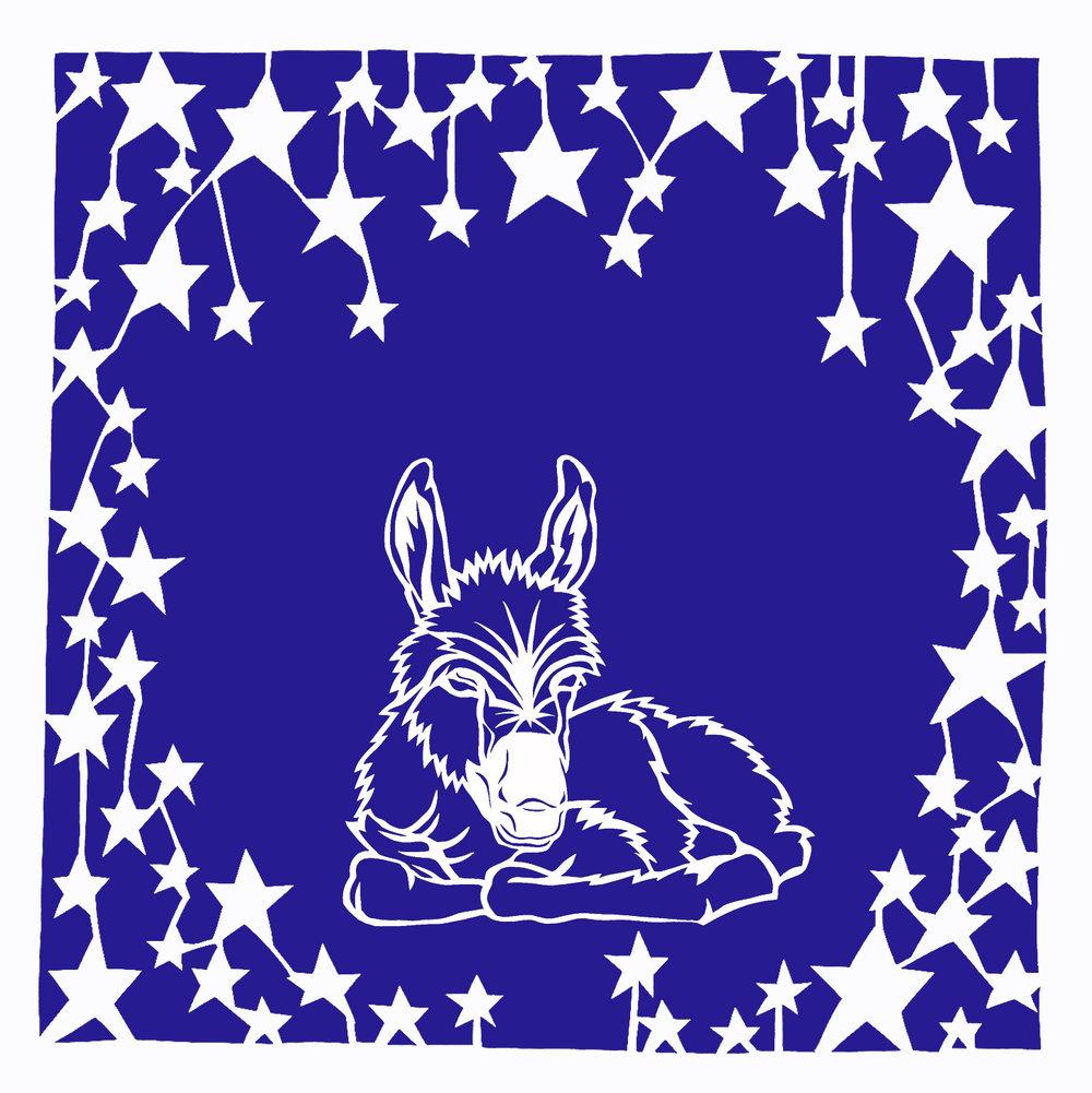 Baby donkey under stars