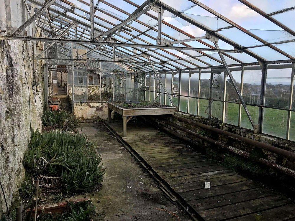 bodfa_greenhouse_1.jpg
