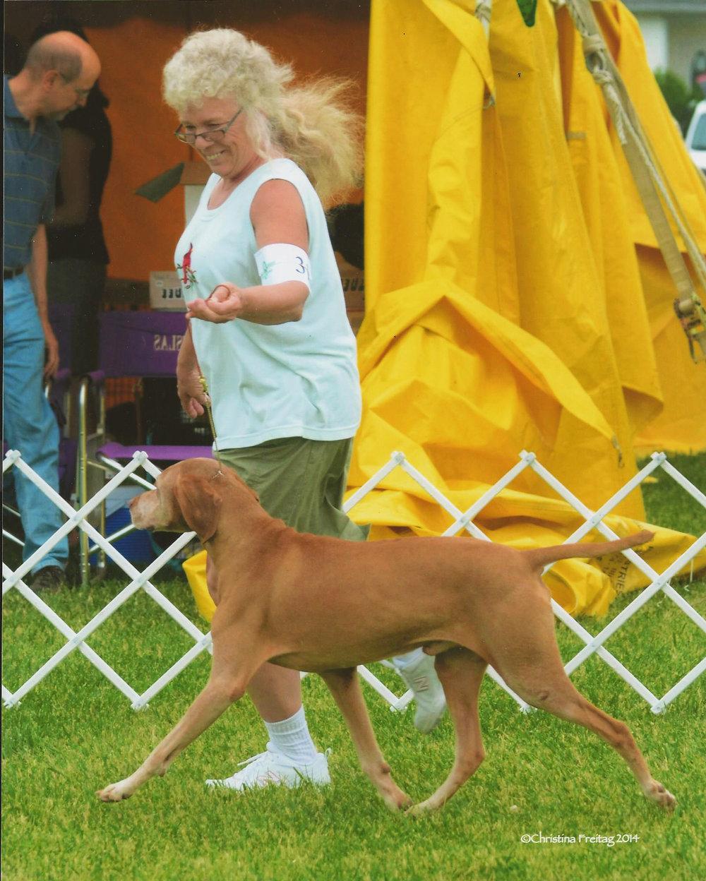 Gaiting at dog show