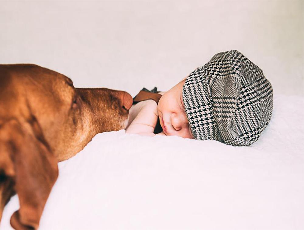 Viszla and sleeping baby