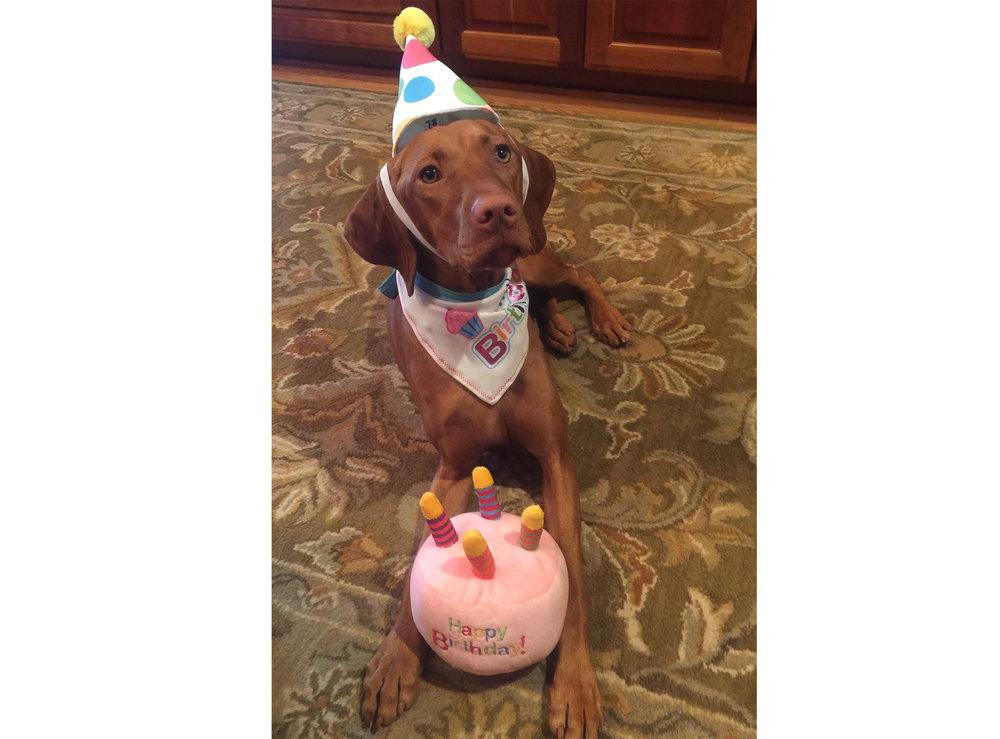 Happy Birthday Viszla