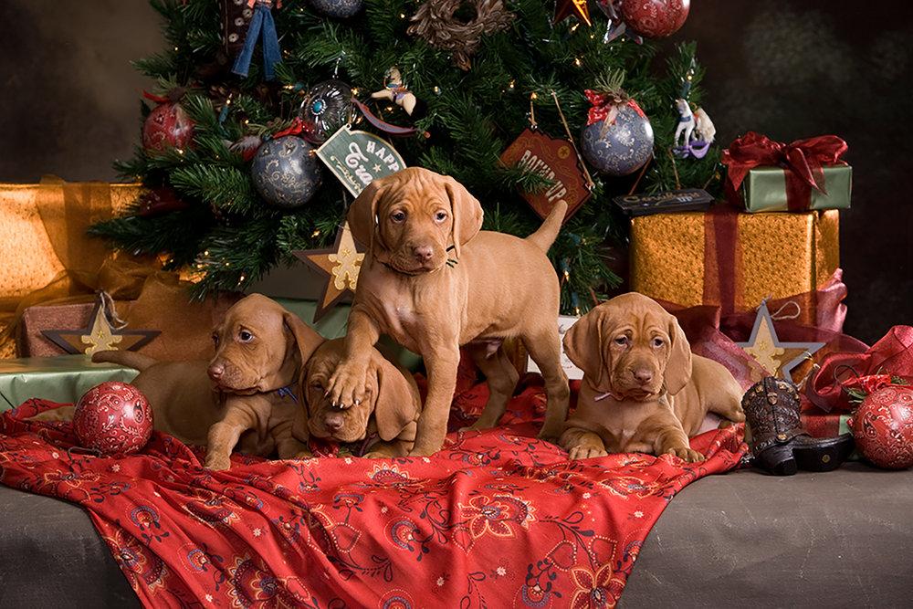 Christmas litter