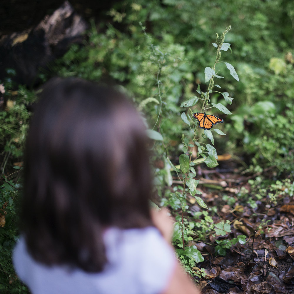 child and monarch butterfly in the garden.jpg