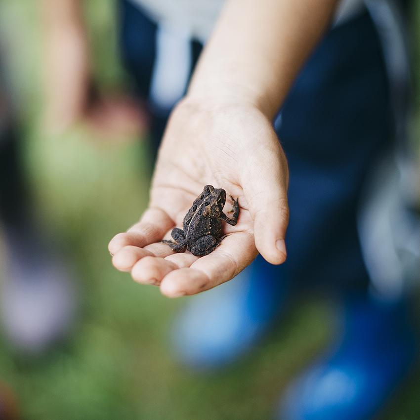 baby toad in little handssm.jpg