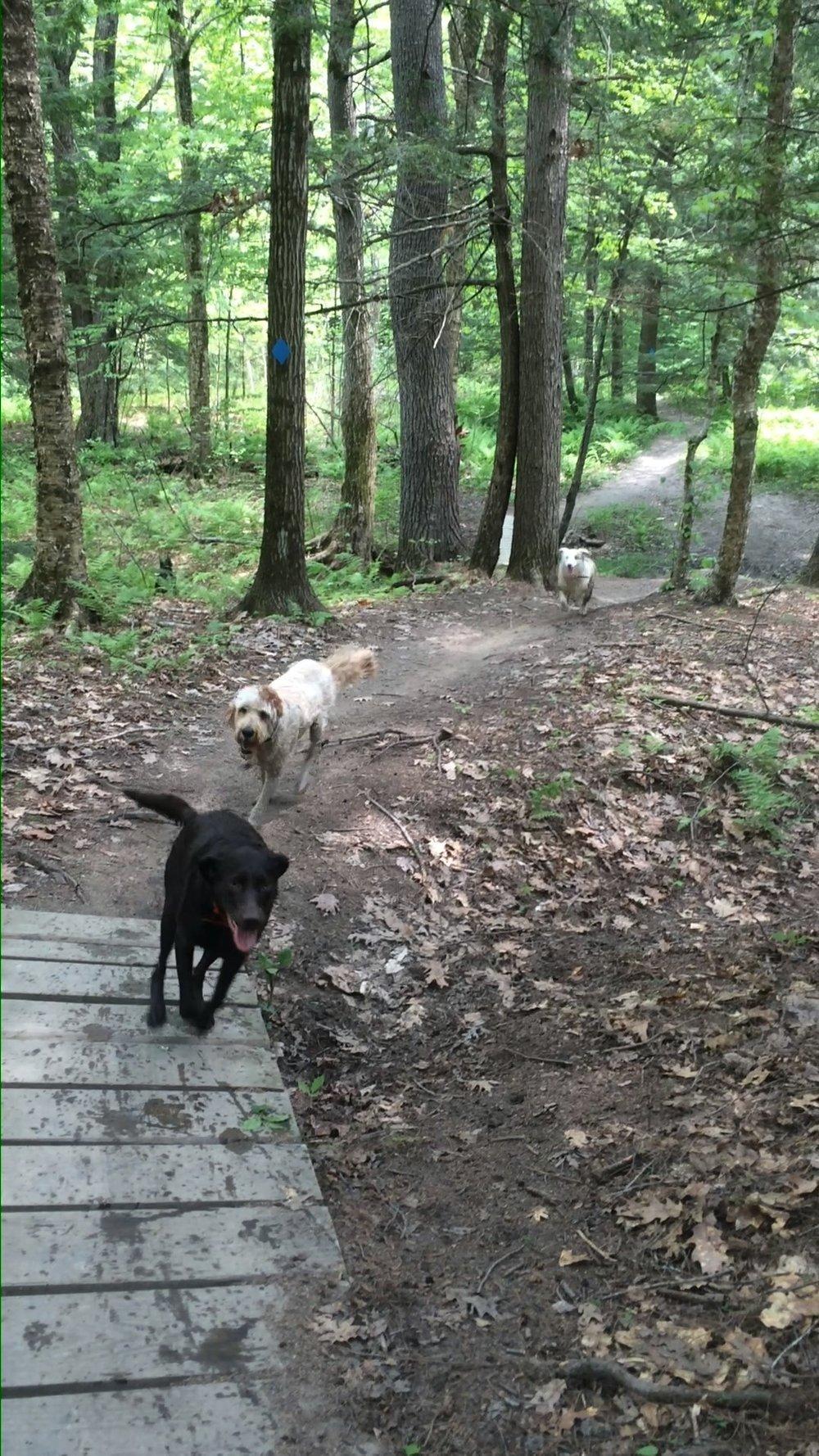 Dog Camp -