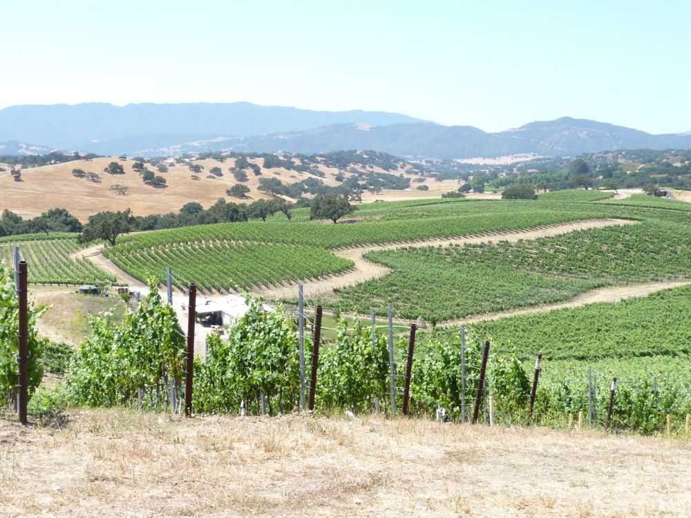 View of Stolpman Vineyards in Ballard Canyon