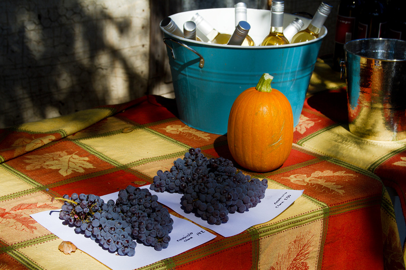 Comparing Nebbiolo clones from Giornata Winery at Luna Matta Vineyards