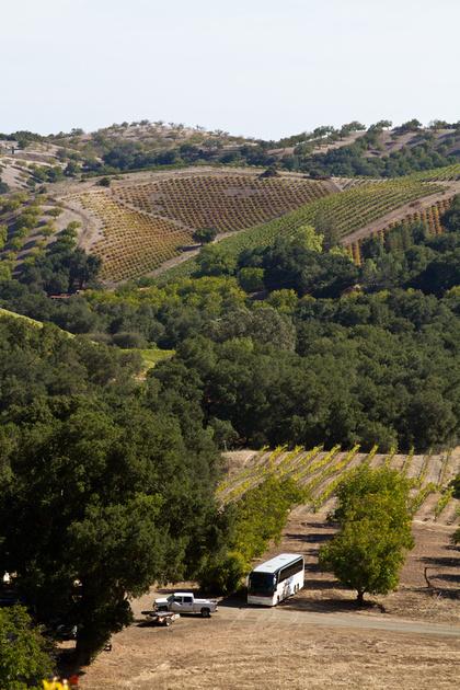 View of Luna Matta Vineyards