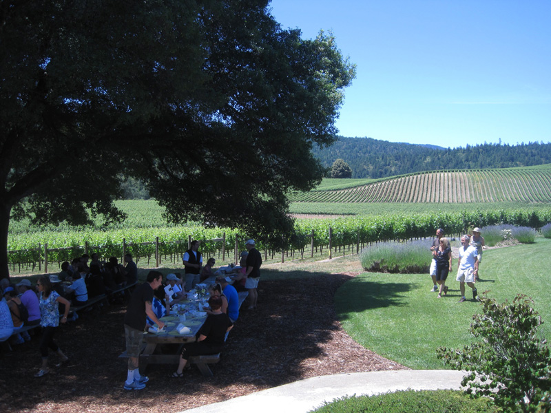 Lunch in Duck Horn's Goldeneye Vineyards