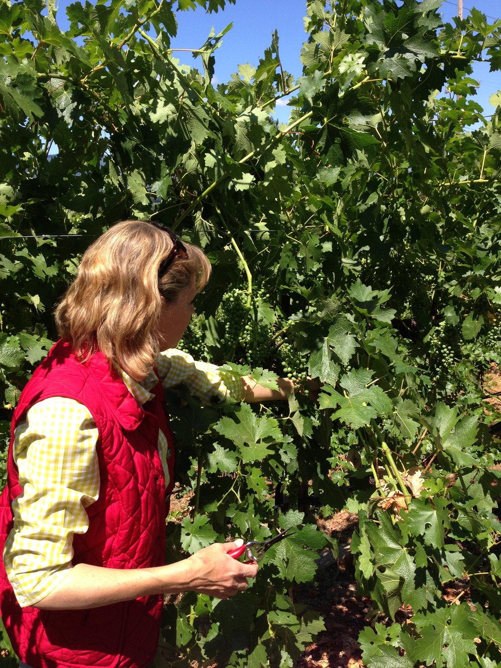 Linda Neal of Tierra Roja Winery Demonstrating Pruning Techniques.jpg
