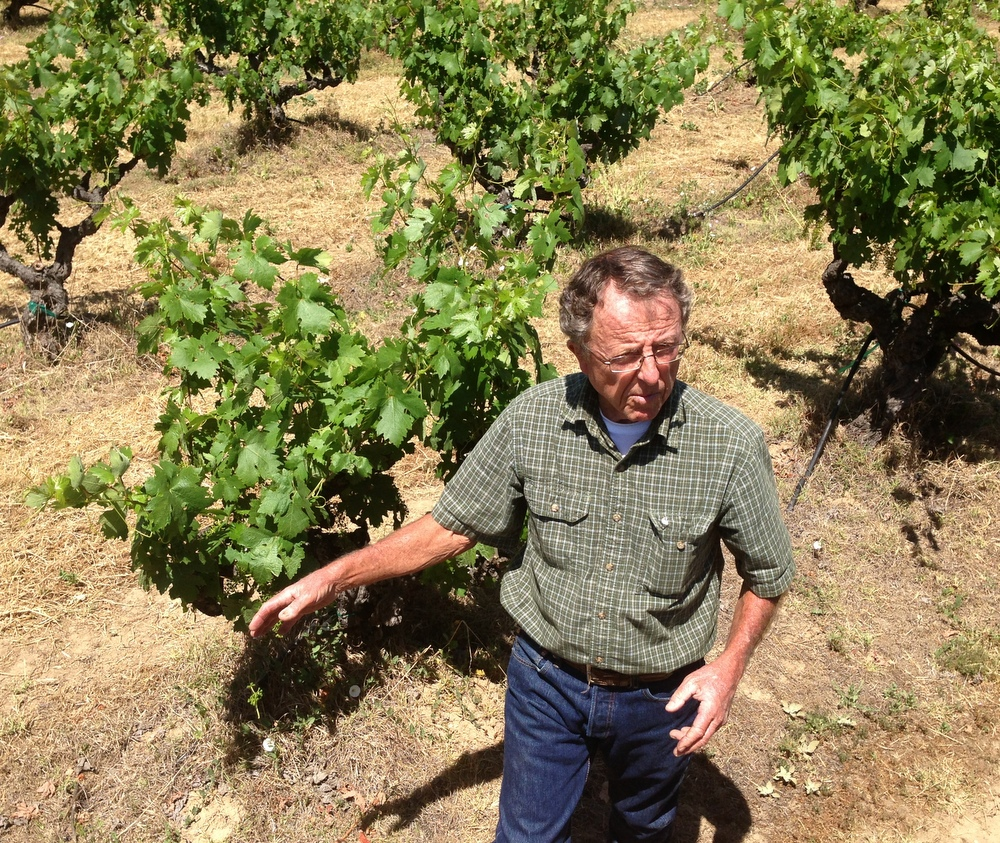 Uncle Freddy showing off one of his prized 100+ year old Zinfandel vines.