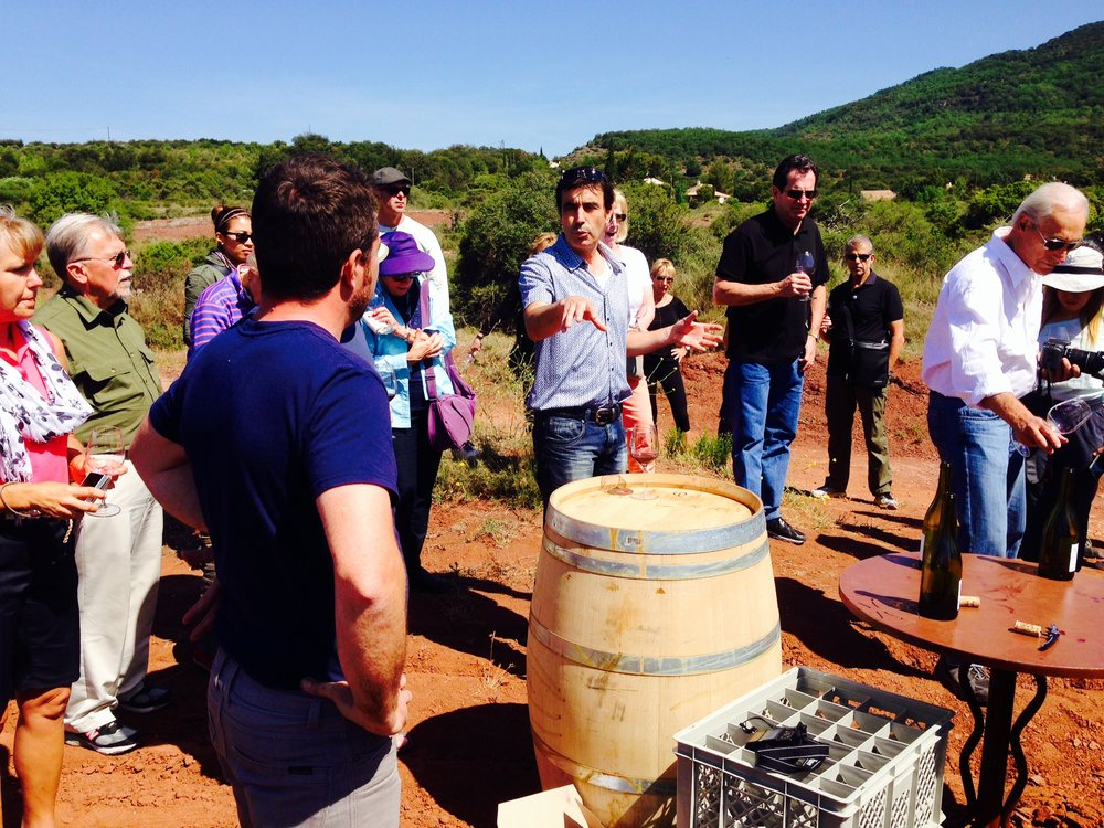 "Tasting the ""garrigue"" in Grenache in the vineyards of La Sauvageonne in the village of St-Jean-de-Blaquiere"