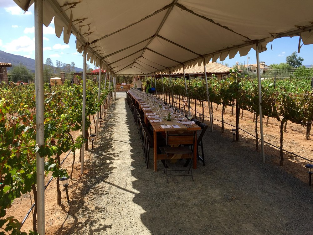 Table set for 56 in the vineyards at Lechuza.