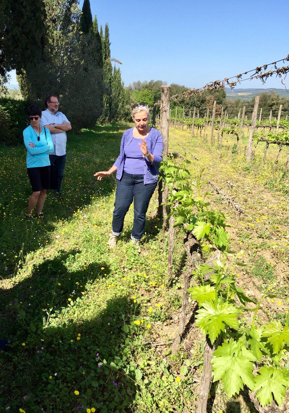 Emilia Silvio Nardi explaining pruning techniques in the vineyards of Silvio Nardi in Montalcino.