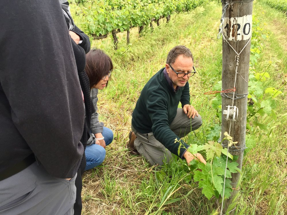 Michele Satta of Michele Satta winery leading a trek through his biodynamic vineyards.  Michele was one of the original pioneers of the Bolgheri region where his winery is located.