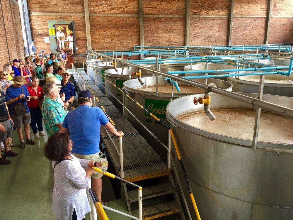 Primary fermentation tanks at Orendain Distillery.