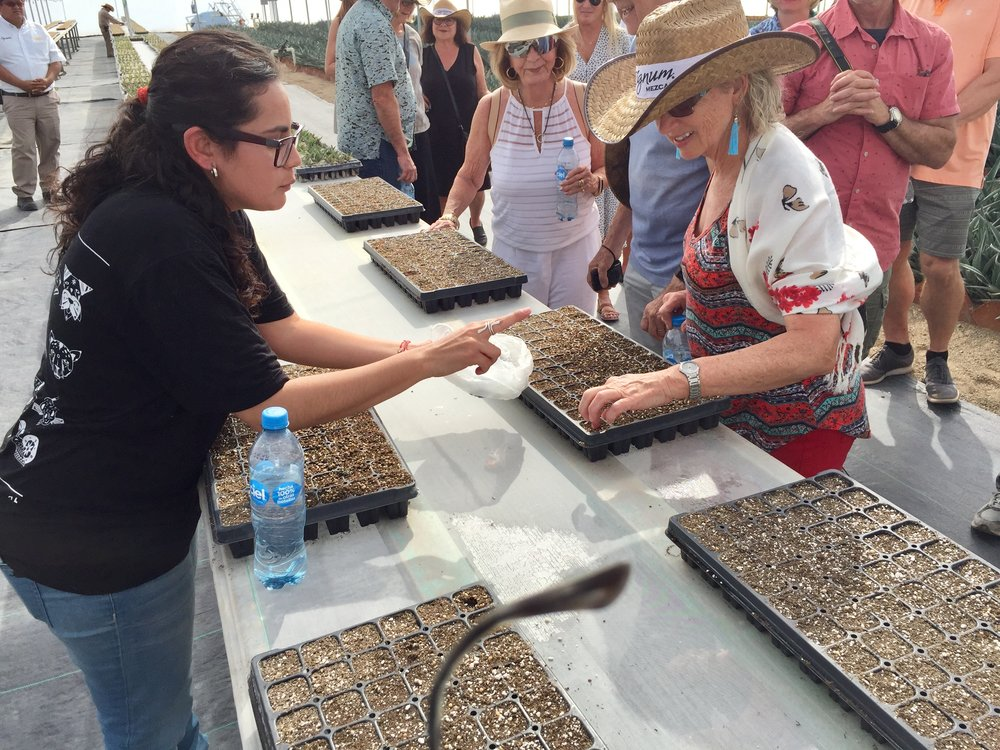 Planting agave seeds in the nursery at Casa AGP.