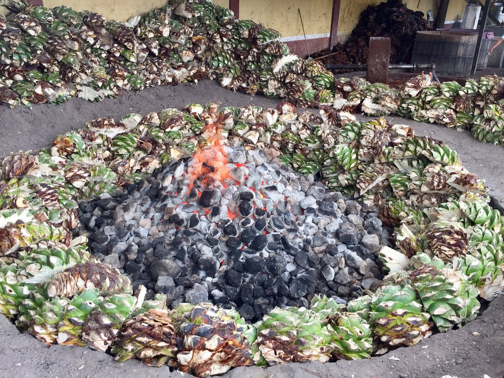 Roasting agaves in a pit.