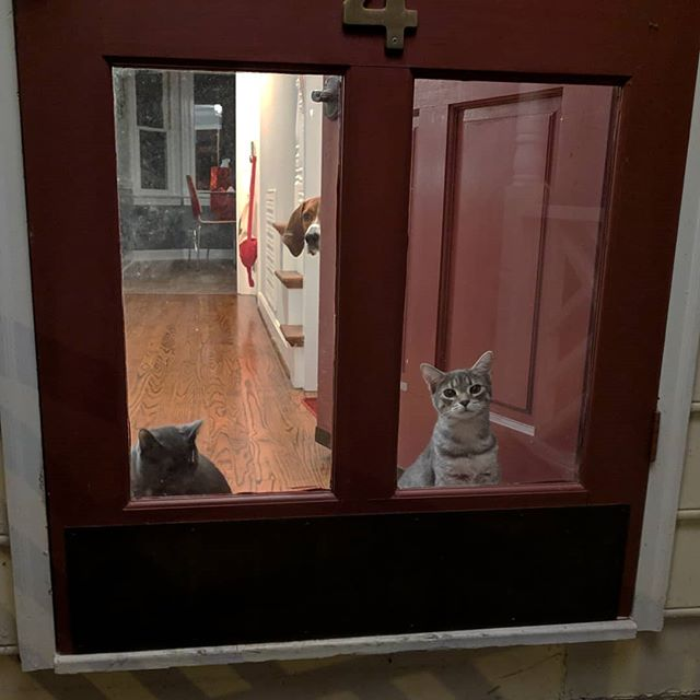 Bravery of 3 pets, ranked.
