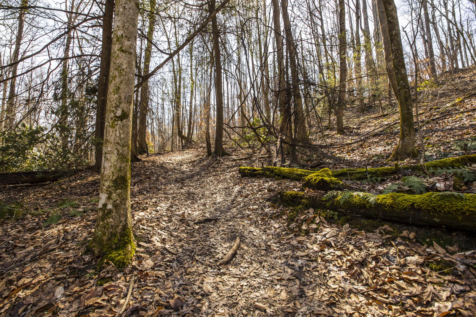 Trees along Kaymoor Miner's Trail in Fayetteville, West Virginia