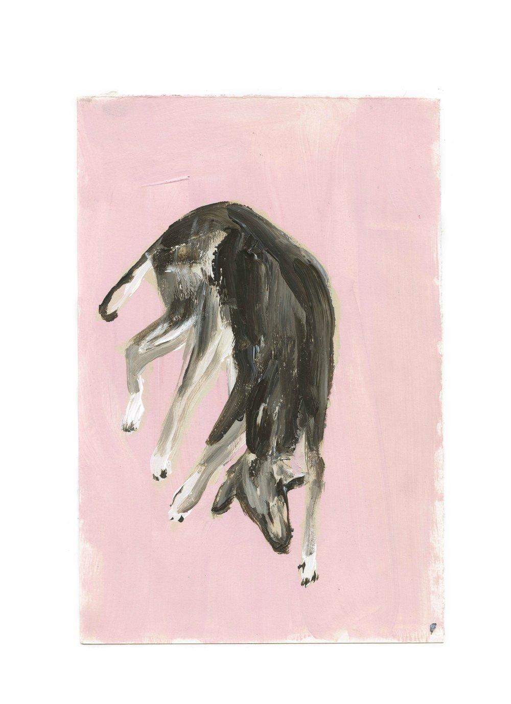 Asahi(dog)II-WEB.jpg