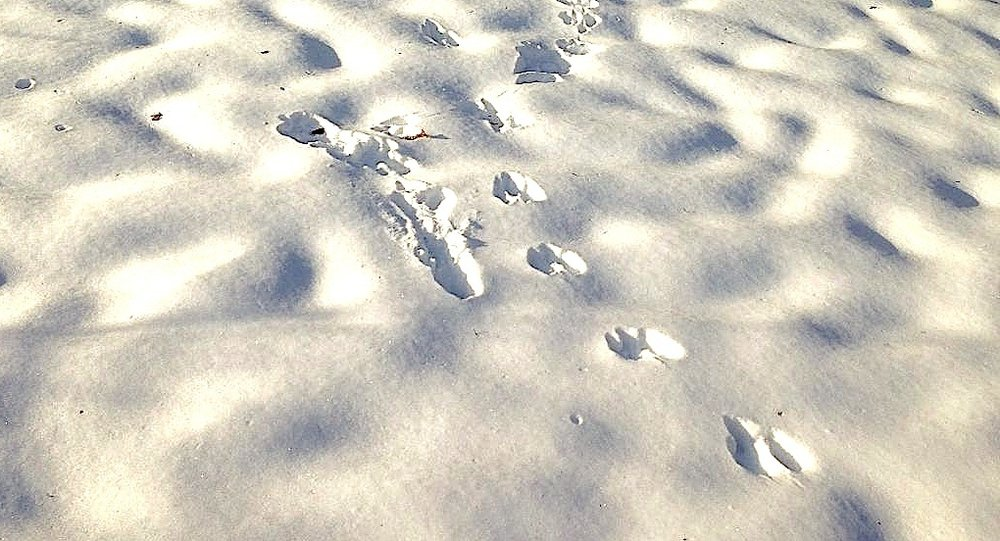footprints+copy.jpg