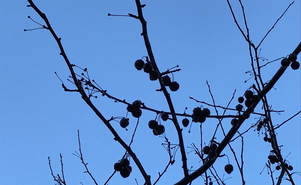 cherry+tree+silouette.jpg