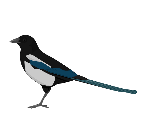 Why the magpie? Its curiosity drives learning, and ours does too.