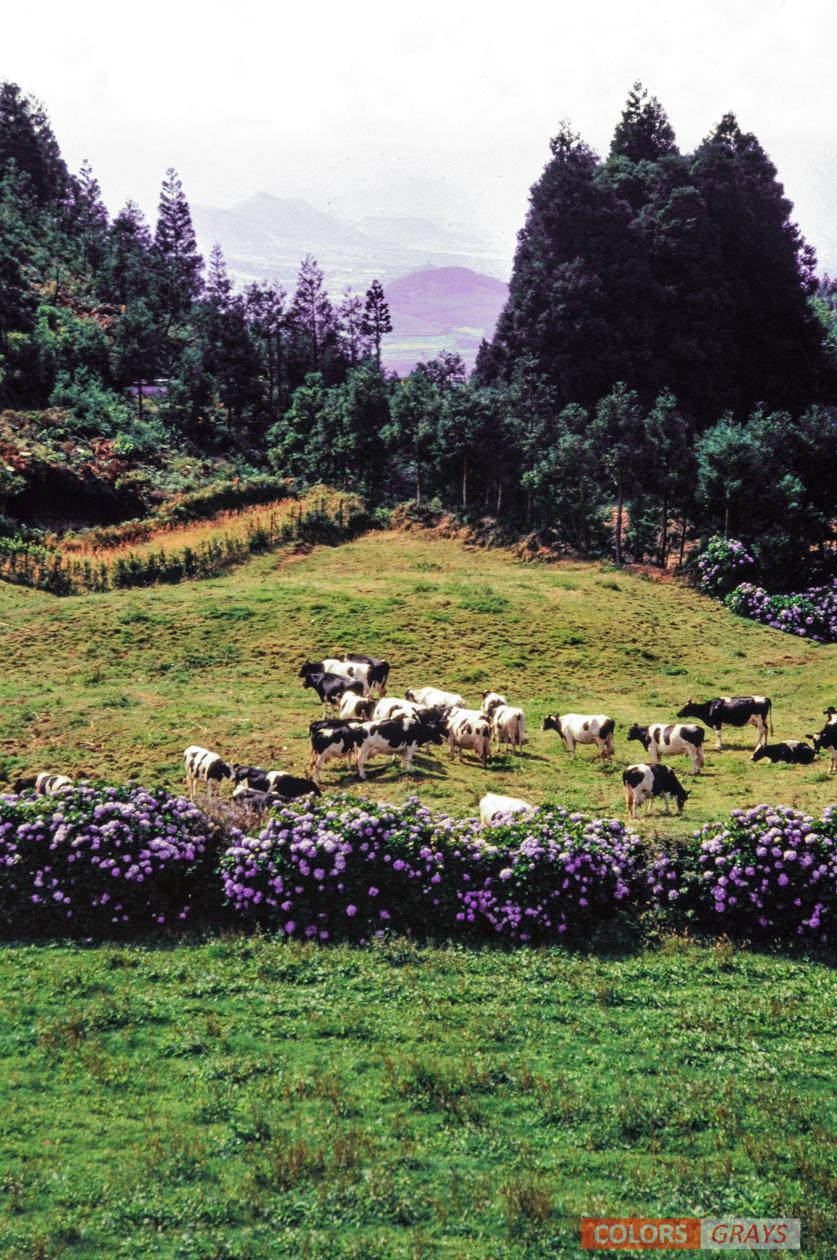 33-Azores_CG.jpg