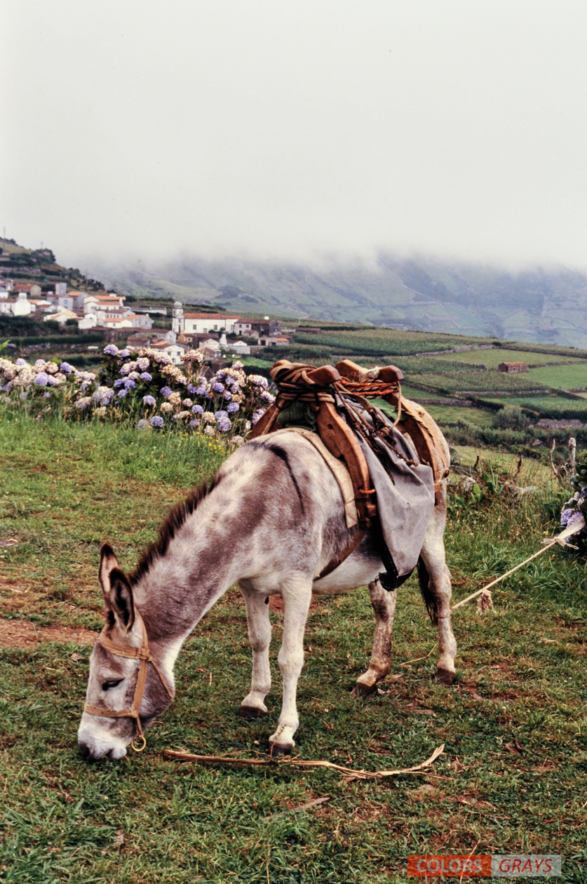 54-Azores_CG.jpg