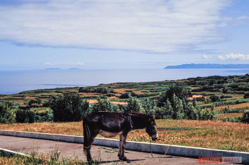 70-Azores_CG.jpg