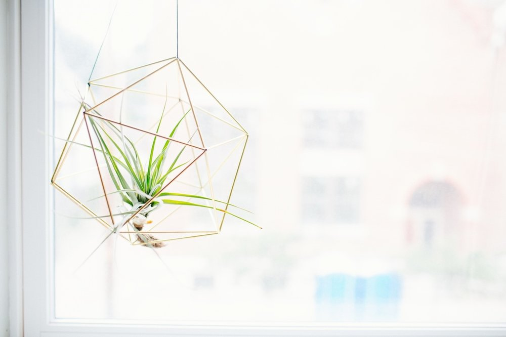 Air plant in window bright