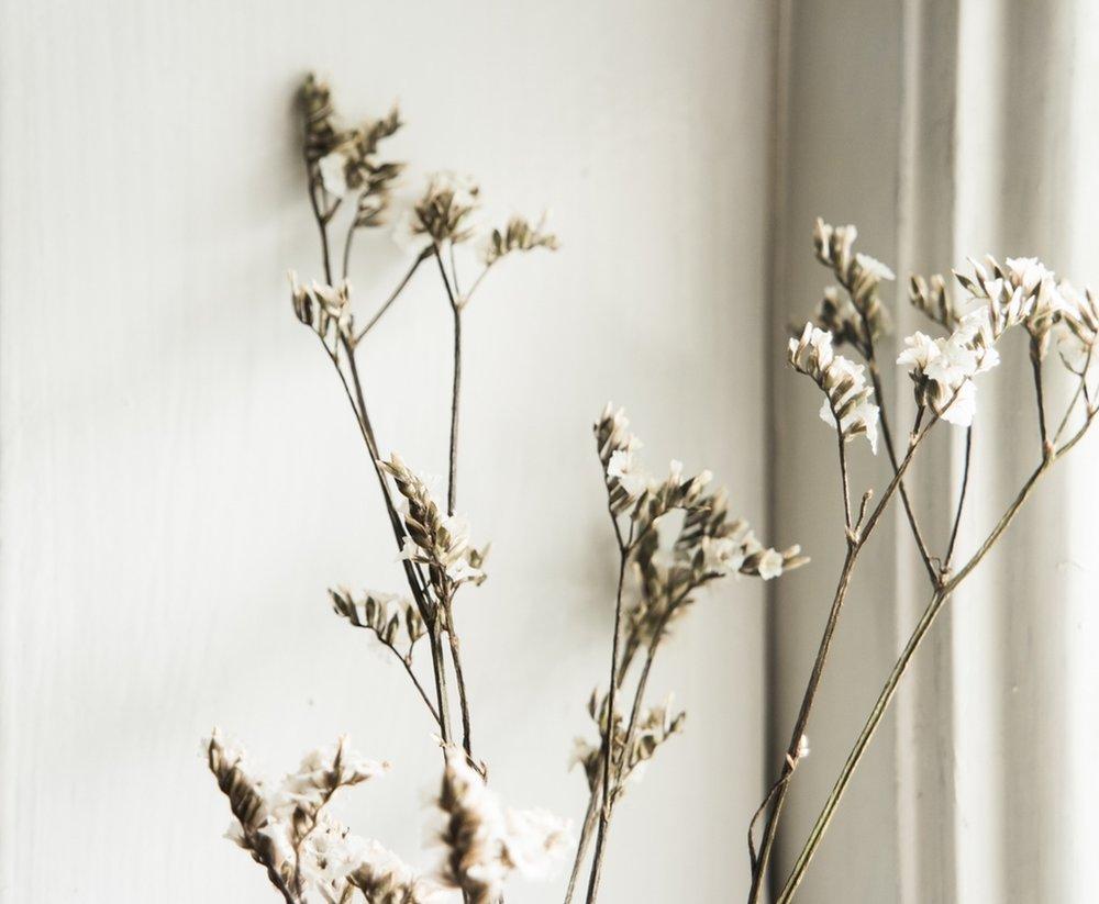 Plant stem in minimal spa space