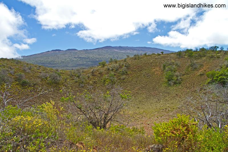 Mauna Kea View