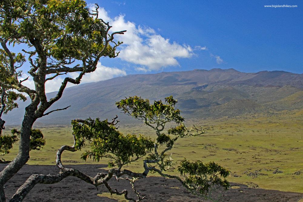 puu huluhulu view.jpg