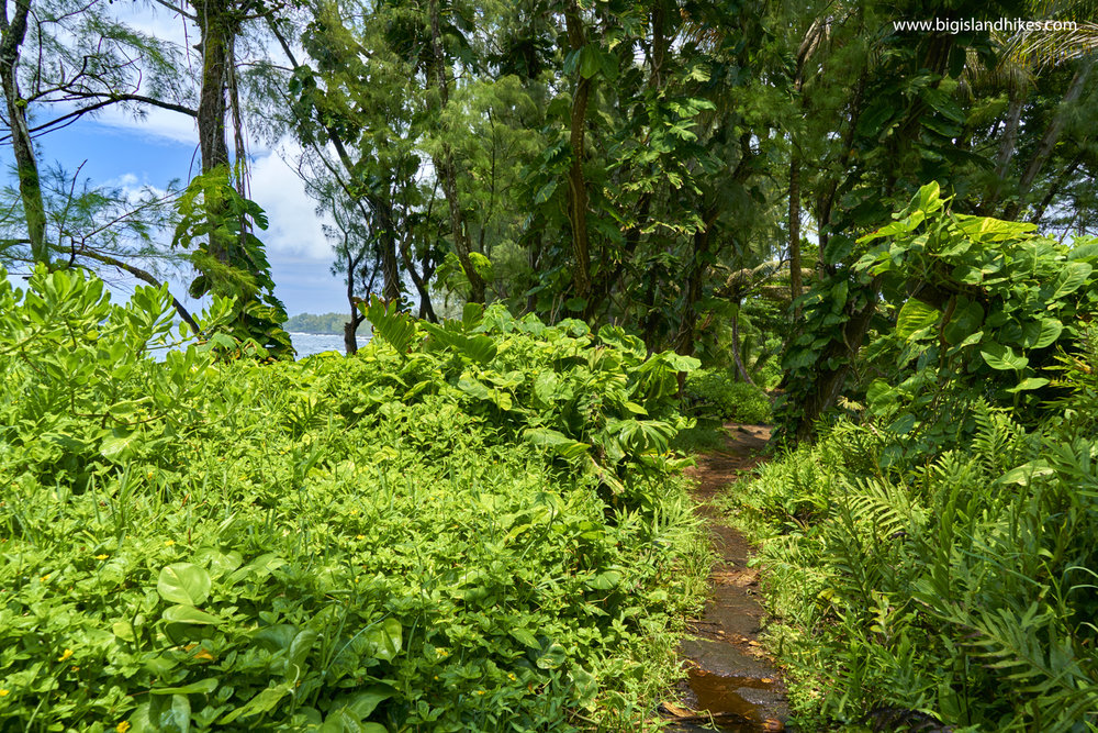 The Puna Trail