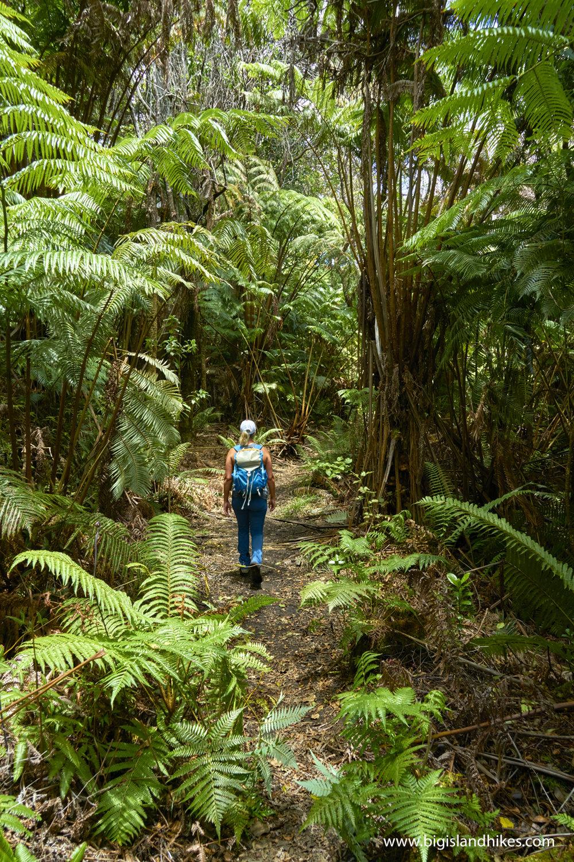 Pu'u Maka'ala Natural Area Reserve