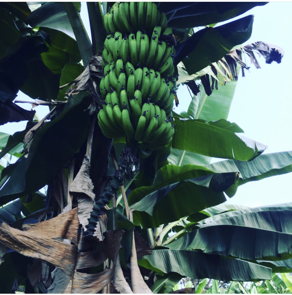 #sundaywalkrwanda discovering  #notfarfromKgliConvCentre
