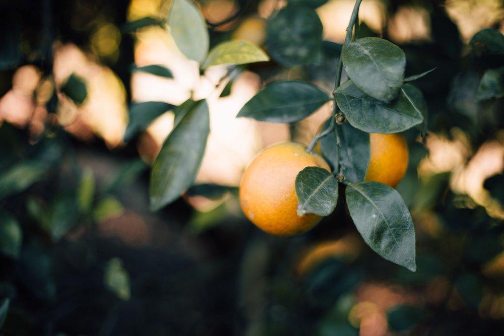 High Vibe Highlight: Citrus (w/ Recipe!) — Elle Be