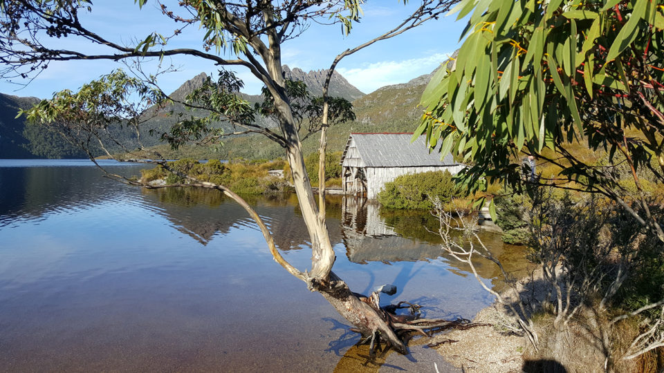 Park Explorer Tours - Cradle Mountain Highlanders