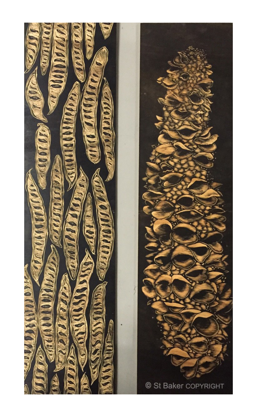 Poinciana Pod and Banksia Wood Carvings