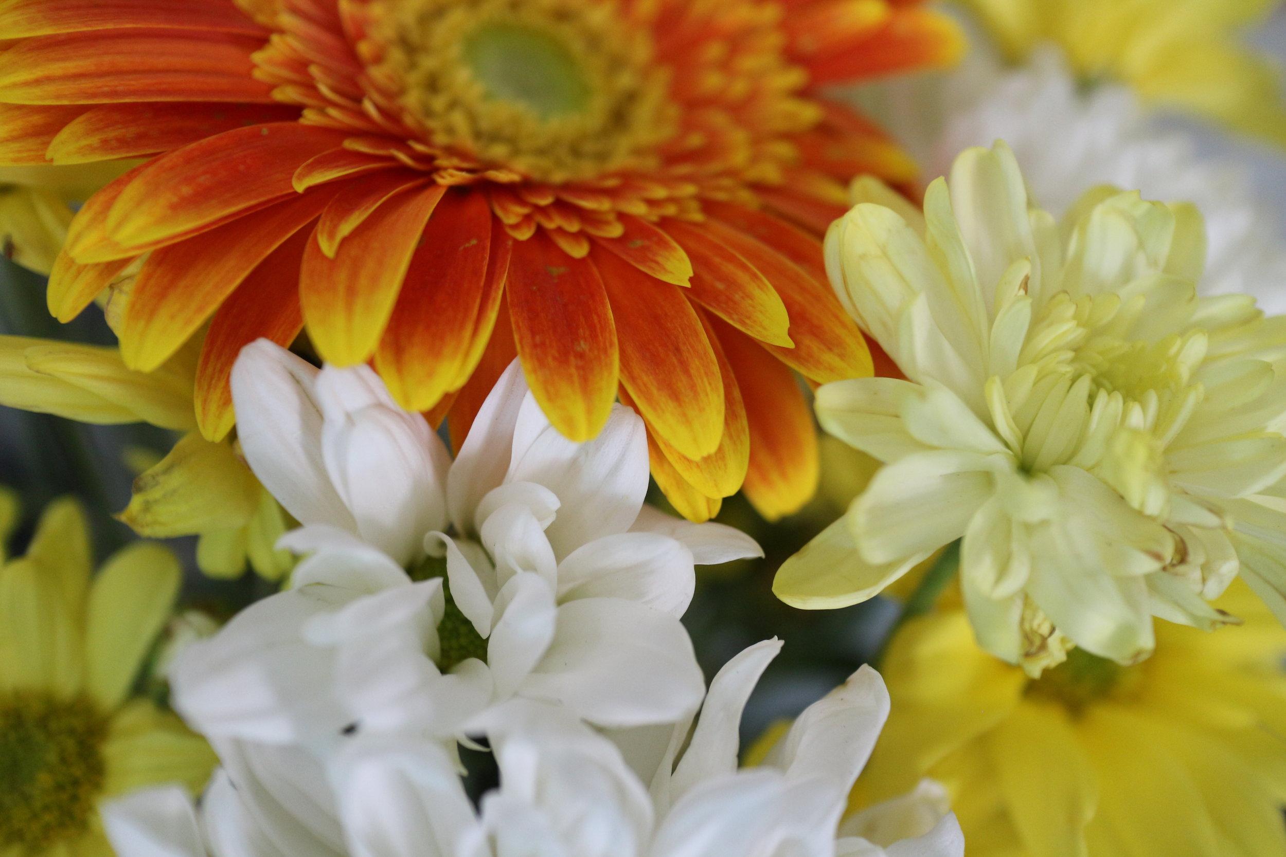 flowers_january cure