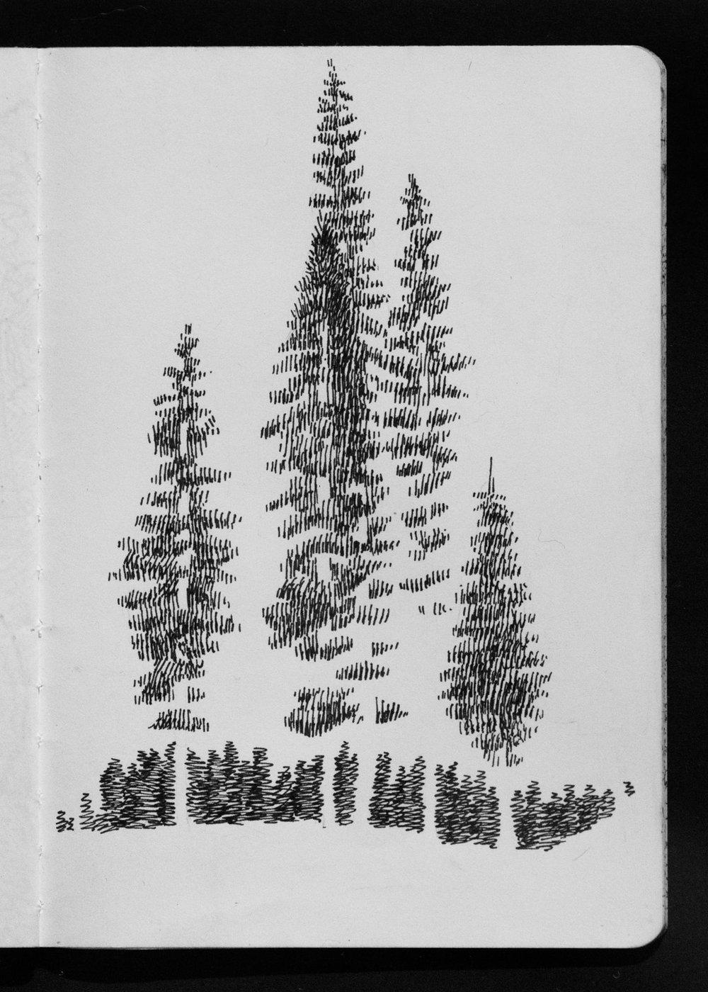 01-17 Tree Impressions.jpg