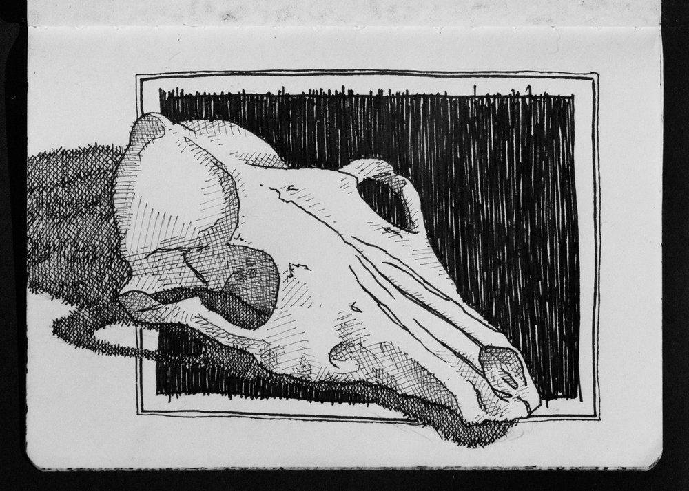 02-23 Coyote Skull.jpg