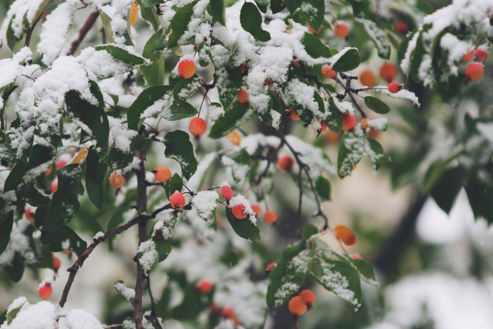 Winter - 대관령겨울음악제 (2월)