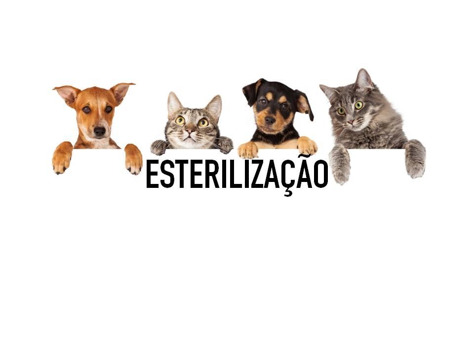 veterinariosintra_esterilizacao2019.jpg