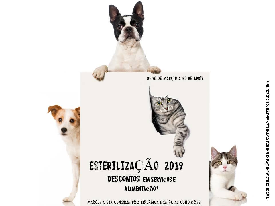 veterinariosintra_esterilizacao19.jpg