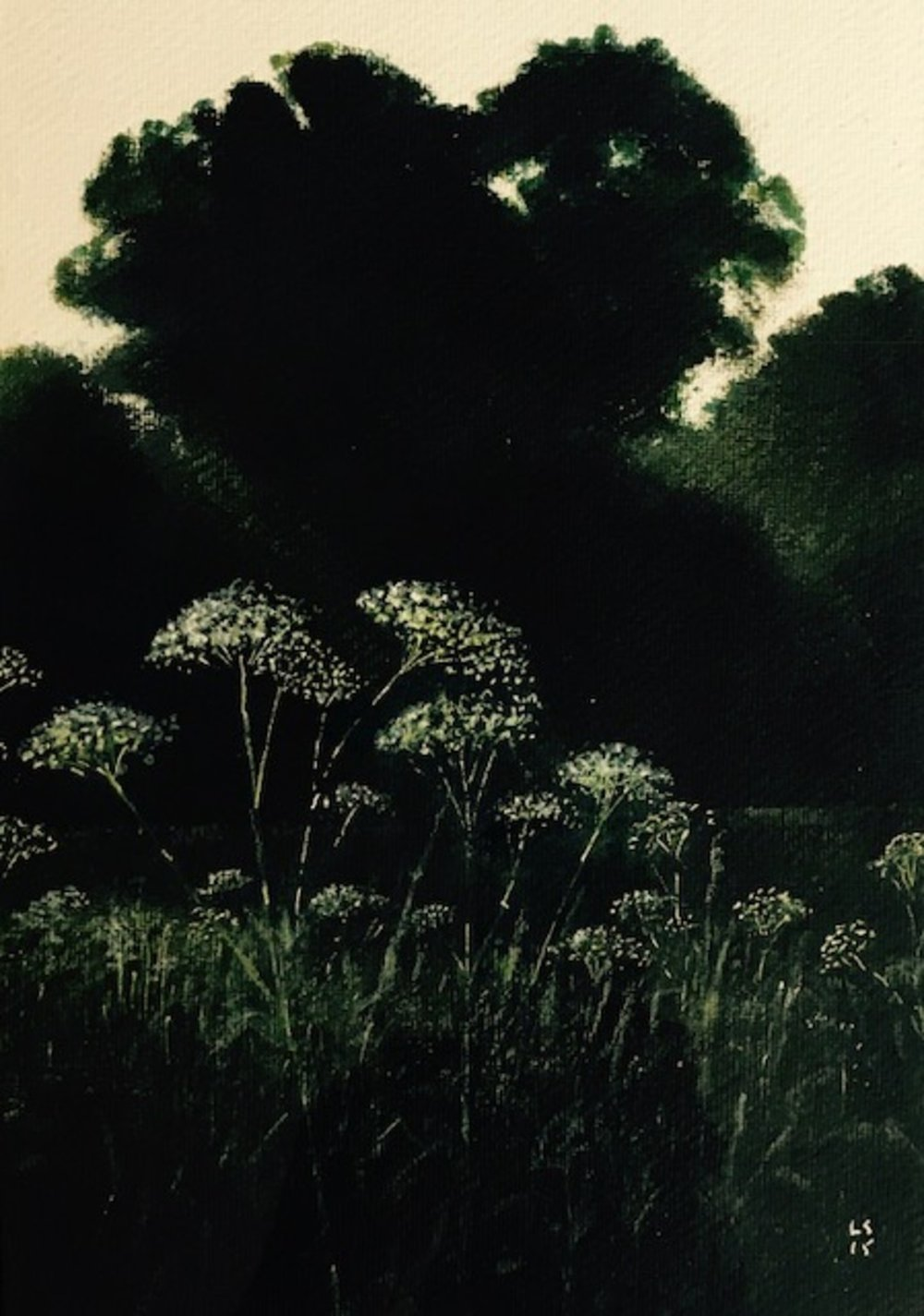 Cow Parsley on the Test