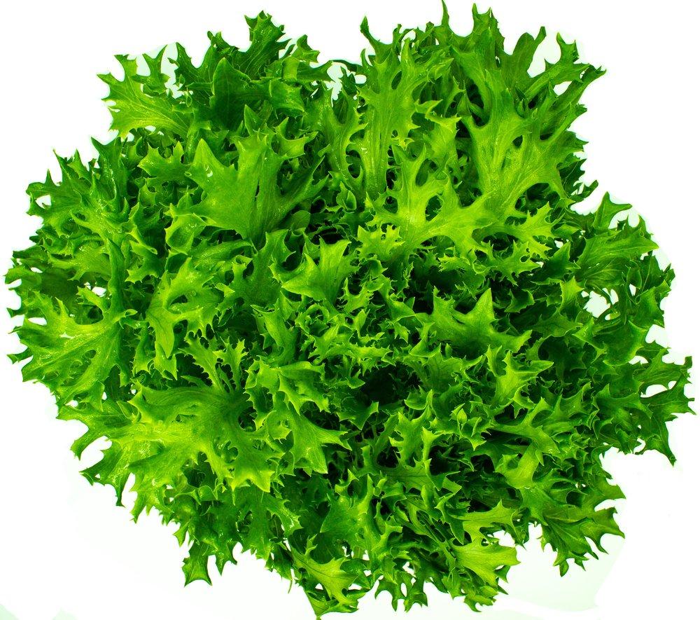 Green Frisee